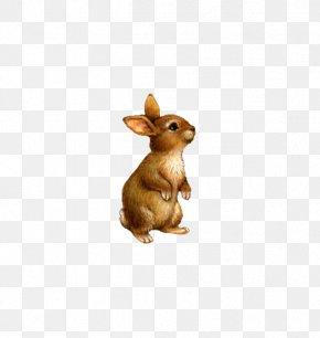 Cute Little Stuffed Bunny - Domestic Rabbit Clip Art PNG