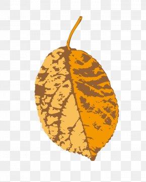 Leaf - Leaf Yellow Illustration PNG