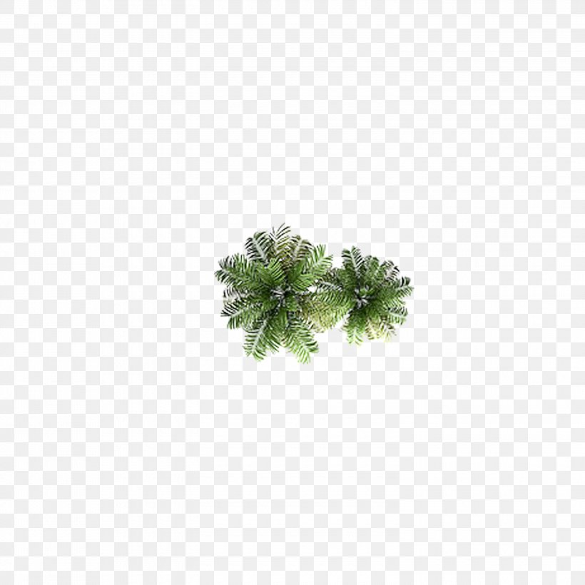 Coconut Tree Top, PNG, 3000x3000px, Tree, Arecaceae, Coconut, Fundal, Grass Download Free