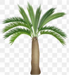 Palm Tree Clip Art Image - Arecaceae Tree Clip Art PNG
