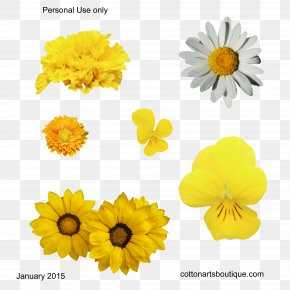 Yellow Flowers - Cut Flowers Yellow Gossypium Herbaceum Cotton PNG