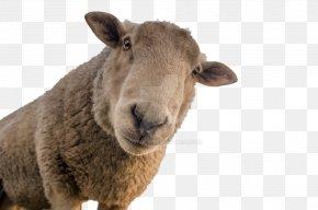 Goat Sheep - Sheep Shearing Goat Sheep Farming Wool PNG