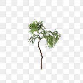 Tree - Asian Palmyra Palm Tree Salix Pierotii Clip Art PNG