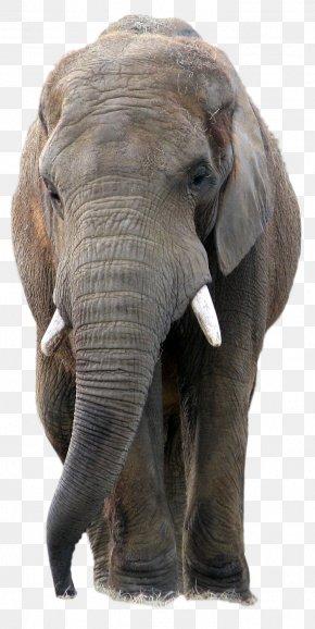 Animal - Elephant PaintShop Pro Icon PNG