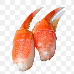 Snow Crab Crab Claw Clasp Free - Snow Crab Claw PNG