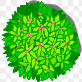 Tree Top View - Tree Plant Clip Art PNG