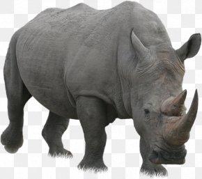 Rhino - Rhinoceros Computer File PNG