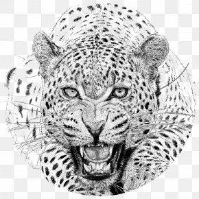 Cheetah - Cheetah Jaguar Drawing Snow Leopard African Leopard PNG