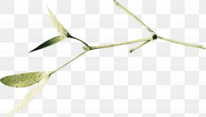 Green Leaves - Twig Material Energy PNG
