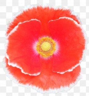 Flower - Belur Math California Poppy Jayrambati Flower PNG