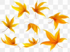 Fall Leaves Clip Art Image - Petal Leaf Flowering Plant Clip Art PNG