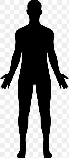 Homo Sapiens Human Body Clip Art PNG
