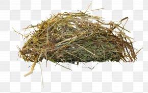 Bird's Nest - Edible Birds Nest Bird Nest PNG