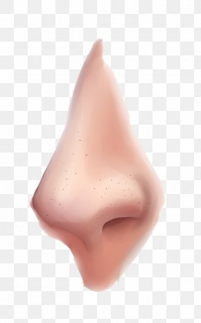 Nose Clipart - Nose PNG