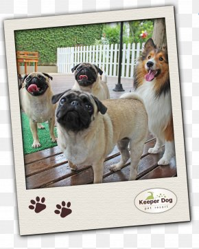 Puppy - Pug Dog Breed Toy Dog Breed Group (dog) Pet PNG