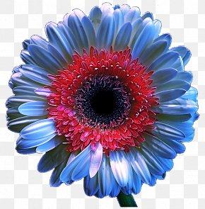 Chrysanthemum - Transvaal Daisy Chrysanthemum Floristry Cut Flowers Cobalt Blue PNG