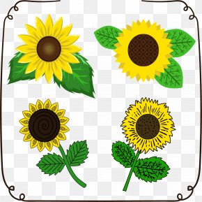 Sunflower Flower Of Life - Common Sunflower Euclidean Vector Drawing Download PNG