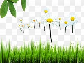 Natural Environment - Natural Environment Nature Euclidean Vector PNG