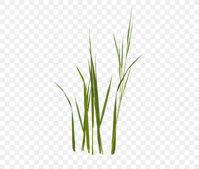 Sweet Grass Wheatgrass Commodity Grasses Plant Stem, PNG, 400x698px, Sweet Grass, Commodity, Grass, Grass Family, Grasses Download Free