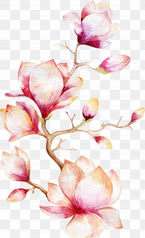 Orchid Tree - Watercolor Painting Magnolia Flower PNG