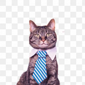 Tie Cat - Catification: Designing A Happy And Stylish Home For Your Cat (and You!) Catify To Satisfy: Simple Solutions For Creating A Cat-Friendly Home Pet Organization PNG