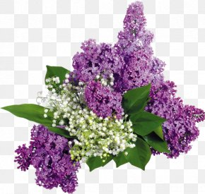 Flower - Common Lilac Flower Garden Les Lilas PNG
