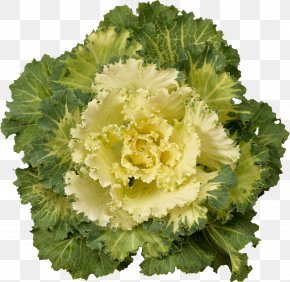 Green Flowers - Cabbage Kale Cauliflower Brussels Sprout Broccoli PNG