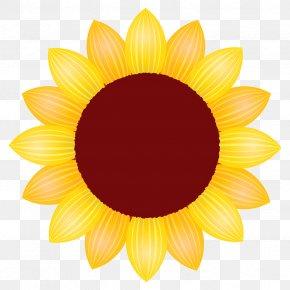 Flowering Plant Daisy Family - Sunflower PNG
