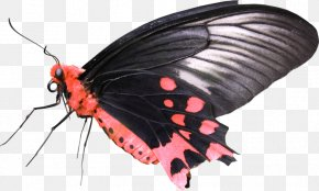 BUTERFLY BAGRAOUND - DeviantArt Photography Drawing PNG
