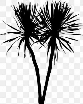 Asian Palmyra Palm Palm Trees Leaf Plant Stem Flower PNG