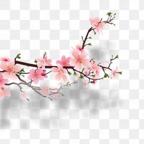Beautiful Peach - Cherry Blossom Peach Clip Art PNG