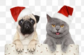 Christmas,Halloween,Christmas Hats - Cat Dog Santa Claus Christmas Pet PNG