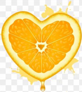 Orange - Orange Juice Fruit Lemon PNG