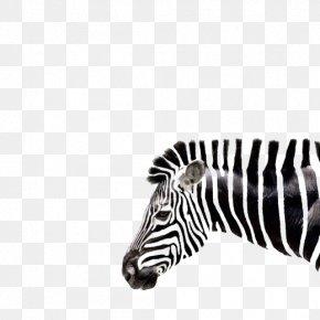 Art Zebra Head Shape - Zebra Drawing Art PNG