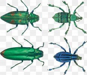 Bug Image - Insect Biochemistry And Molecular Biology Hexapoda Invertebrate Exoskeleton PNG