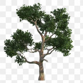 Trees - Tree Gratis Vecteur PNG