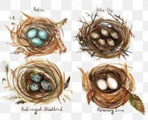 Cartoon Bird's Nest - Edible Birds Nest Bird Nest Watercolor Painting Drawing PNG