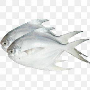 Fish Net - Pampus Argenteus Black Pomfret Saltwater Fish PNG