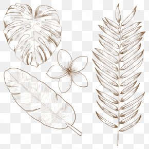 Tropical Plants - Tropics Drawing Leaf PNG