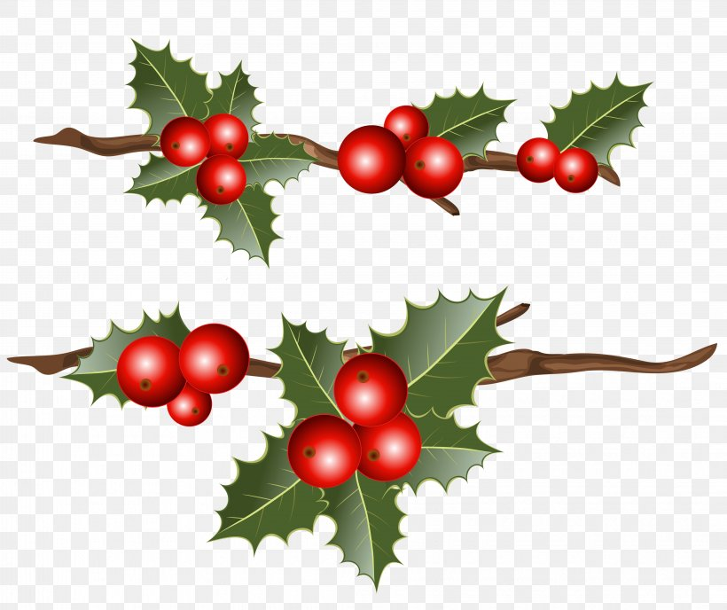 Common Holly Christmas Mistletoe Clip Art, PNG, 4265x3583px, Common Holly, Aquifoliaceae, Aquifoliales, Berry, Branch Download Free