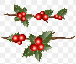 Holly Branches Clipart Image - Common Holly Christmas Mistletoe Clip Art PNG