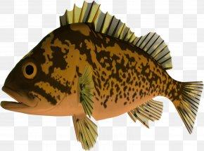 Fish - Fish Digital Scrapbooking Collage Clip Art PNG