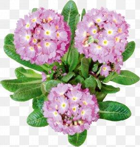 Flower - Cut Flowers Lilium Clip Art PNG