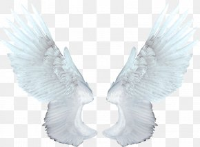 White Angel Wings - Food Network Magazine Animation PNG