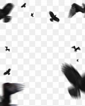 Bird Migration Pigeons And Doves - Picsart Background PNG