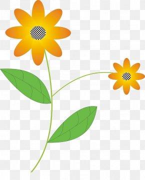 Sunflower - Flower Flora Petal Illustration PNG