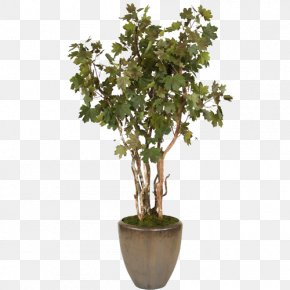Dark Green Shrub Bonsai Trees Conical Pot - Flowerpot Shrub Tree Bonsai Sageretia Theezans PNG
