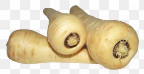 Parsnip - Parsnip Carrot Root Vegetables Turnip PNG