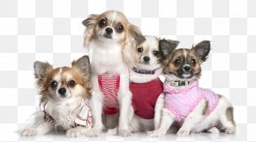 Meng Meng Da Cute Puppy Pet Decorative Pattern - Chihuahua Shih Tzu Puppy Cat Pet PNG