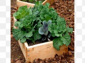 Spring Greens Flowerpot Herb Raised-bed Gardening PNG